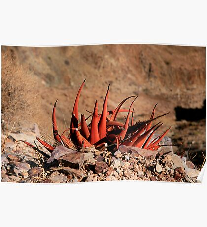 Aloe - Fish River Canyon Namibia Poster