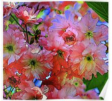 pinkadelic blooms, spring blossoms, bold colors Poster