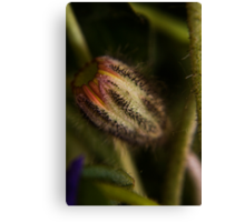 Aciform (from wild flowers collection) Canvas Print