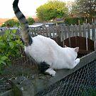 Cat Gymnastics by Ladymoose