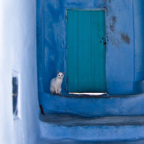 Waiting White Cat by eyeshoot