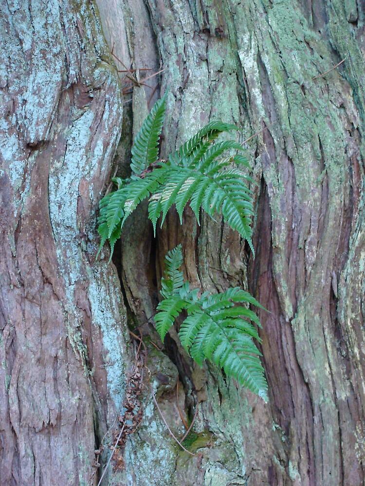 small fern on tree trunk, Kamakura, Japan by wilderpisces