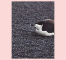 Pretty Chinstrap Penguin Kids Clothes