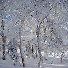 Mountain near Sapporo, Hokkaido, Japan by wilderpisces