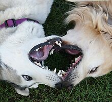 Lover Dogs by adellecousins