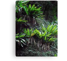 Rainforest Beauty, Minnamurra Falls, NSW, Australia. Canvas Print