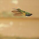 Little Hummingbird by Brian Dodd