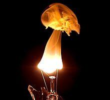 Skull by Steve Chapple