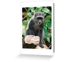 Timid Greeting Card