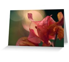 Bougainvillea Bokeh Greeting Card