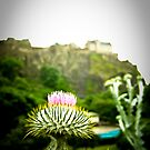 The Princess' Thistle by bababen