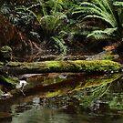 Hogath Falls Tasmania by Judi Corrigan
