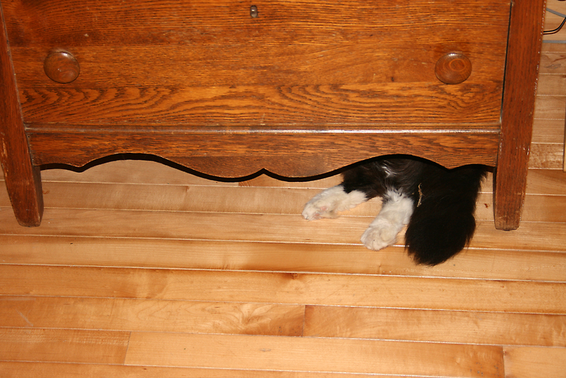 Under the Dresser by Karen Kaleta