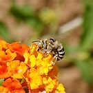 BEE  DINING  by Bonnie Pelton