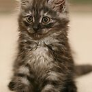 Fluffy Kitty by adellecousins