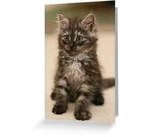 Fluffy Kitty Greeting Card