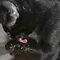 Black Cats( 2 uploads a day)