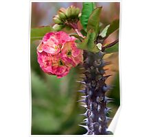 Thorny beauty Poster