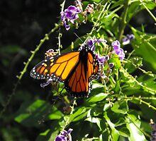 Butterfly by Carol Field
