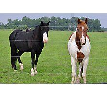 Dos caballos Photographic Print