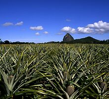 Pineapples Under Tibrogagan by David Cash
