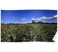 Pineapples Under Tibrogagan Poster
