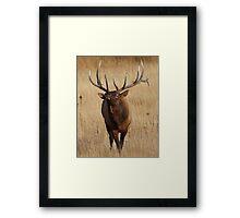 Elk Charging Framed Print