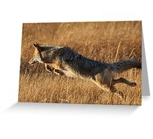 Coyote Action Greeting Card