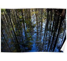 Cypress Tree Reflection Poster