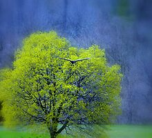 Lone Tree by Laurie Minor