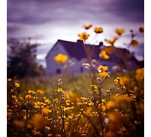 Buttercup Farm Photographic Print