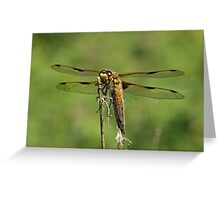 Frontal View Greeting Card