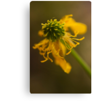 Yellow and Green (from wild flowers collection) Canvas Print