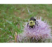 Bumble bee. Photographic Print