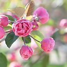 Spring bokeh by Isabelle Lafrance