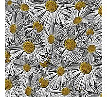 Abstract black and white daisies floral pattern Photographic Print