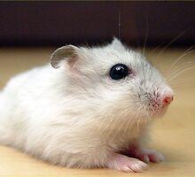 Furry Hamster by kingdomofanimal