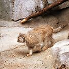 Pallas` Kitty by Kiona  Graley