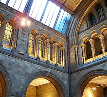 Inside the Natural History Museum by Robert Steadman