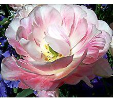 My Favorite Flower Shot Photographic Print