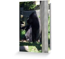 Big Gorrilas Greeting Card