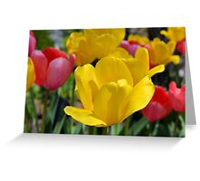 Pink and Yellow Garden Tulips Greeting Card