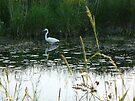 Marsh Beauty by Veronica Schultz
