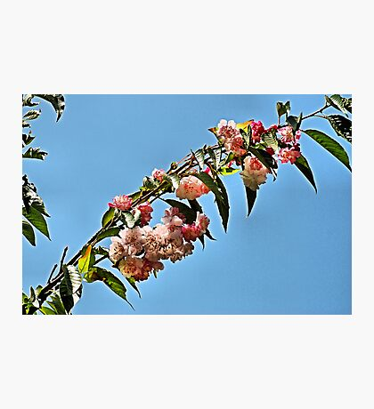 Overhead Blossoms Photographic Print
