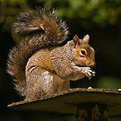 Grey Squirrel by Steve  Liptrot
