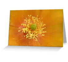 Prickly Pear Flower Macro Greeting Card