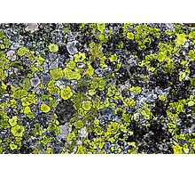 lichen grows on a rock Photographic Print