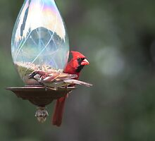 Cardinal and sparrow by Karl R. Martin