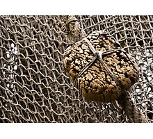 Cork Floater Photographic Print
