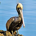 Lonely Pelican by Bob Wall